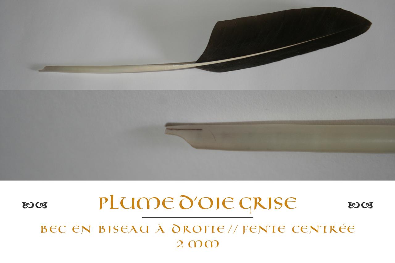plume_oie_grise