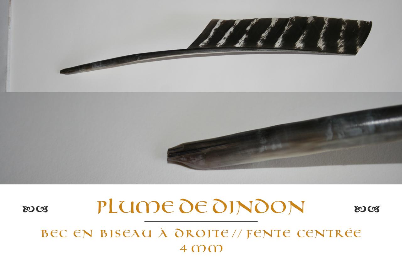plume_dindon